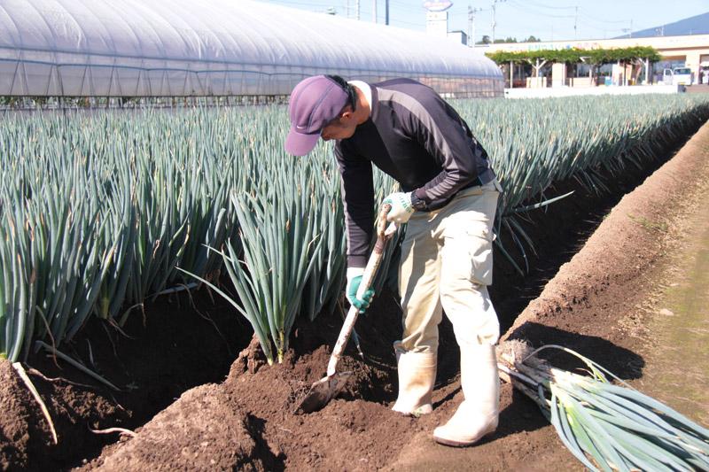 栽培のこだわり それぞれの作物に応じてやり方を変える