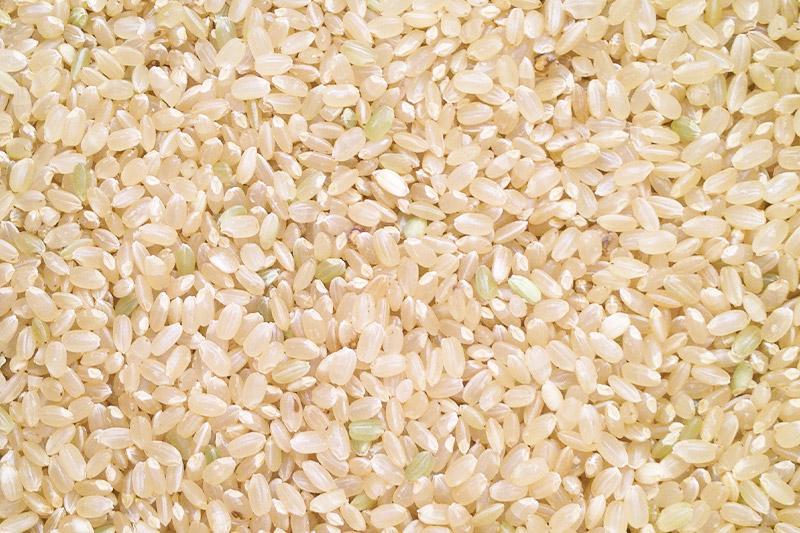 収穫直後の籾